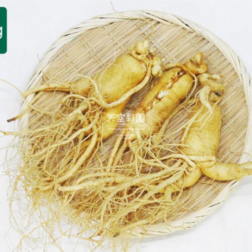 01SEIKNWA2-01