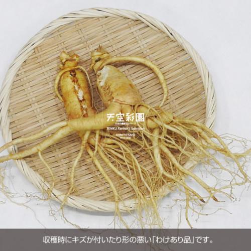 01SEIKNWA3-01