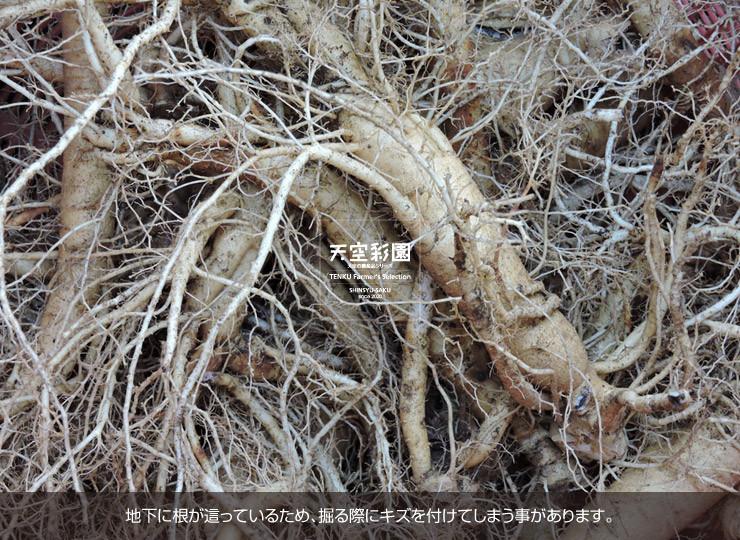 01SEIKNWA5-01