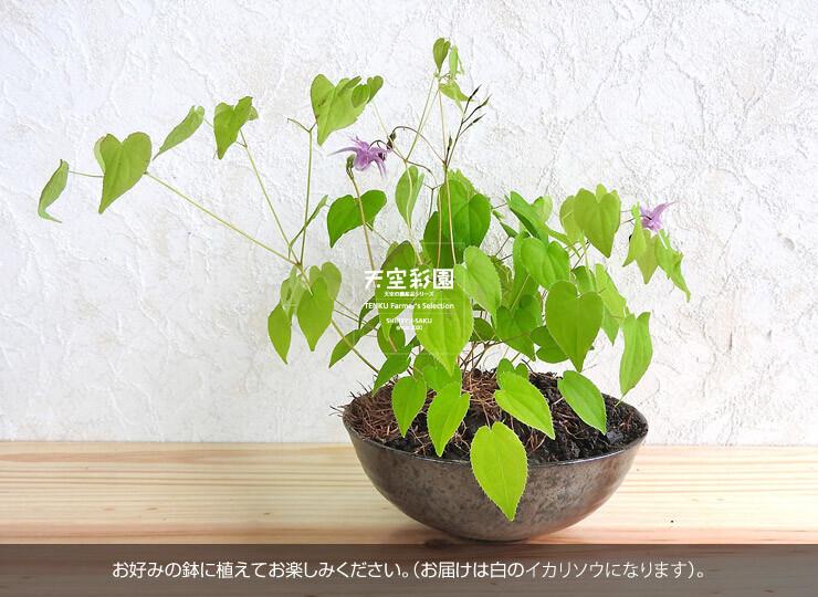 04FPIS351W-01