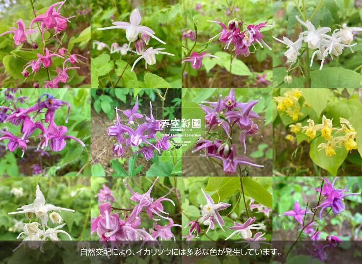 04FPIS51-01