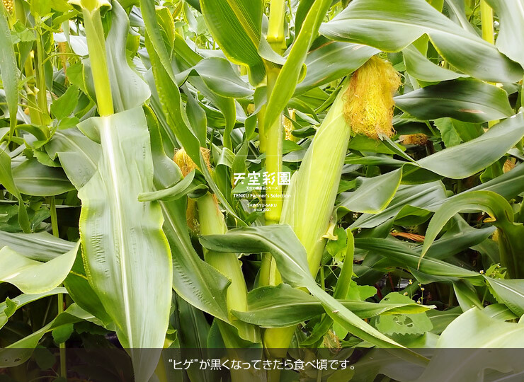 01SEICNMG3-01