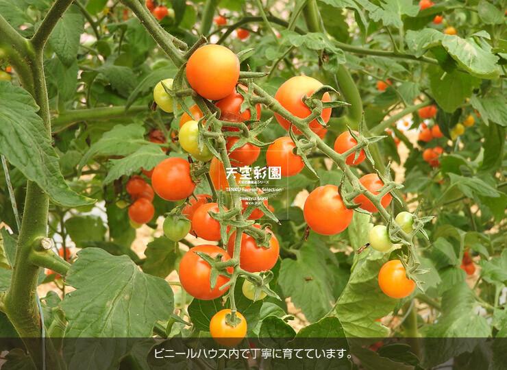 01SEIMTOR1-01