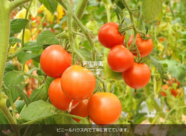 01SEITMF1-01